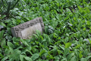 A tombstone hidden among leaves in the Jewish cemetery, Budapest