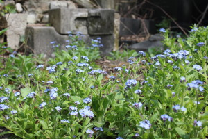 Beautiful nature at the Jewish cemetery, Budapest