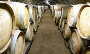 Visiting a cellar in Eger - Wine Tour in Hungary
