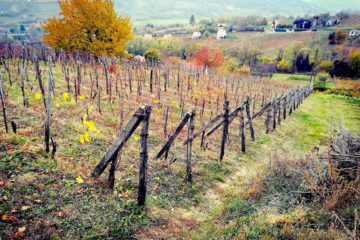 Szekszárd vineyards - where Szekszárd wines are born